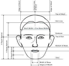 Course: Facial Structure, Proportions and Expression - Online Course