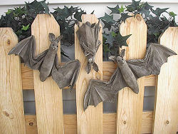 "Sewing pattern for Bats! These easy-to-make creepy little guys are about 6"" tall with 16"" wing spans."