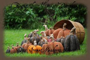 Bountiful Harvest Pumpkins